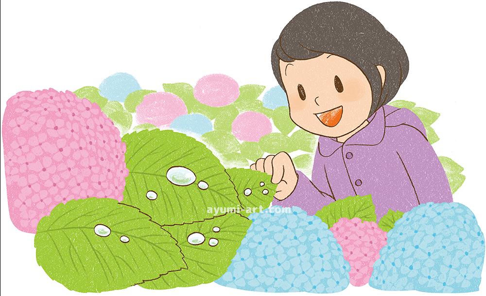 児童書イラスト 紫陽花と女の子 イラストレーター 多田あゆ実